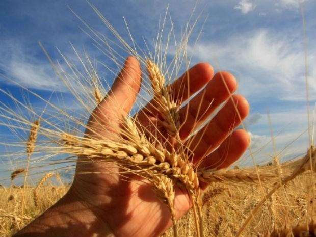 agronegócios indústria de carne do brasil recorre ao trigo em meio