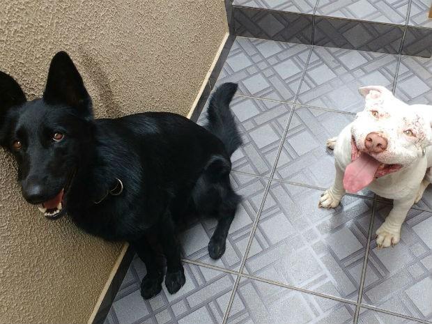 Amora e Hércules se tornaram amigos (Foto: Carlos Dias/G1)