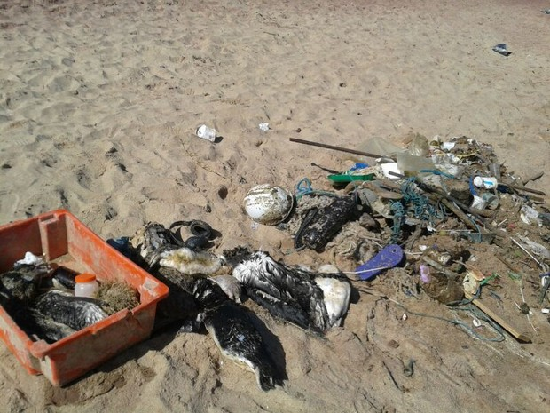pinguis sao encontrados mortos em buzios (Foto: Mônica Cunha/ Inter TV)