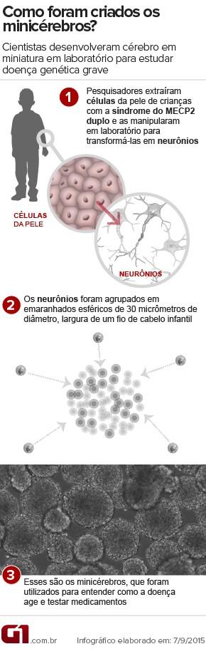 Minicérebros - Infográfico - Pesquisa do Alysson Muotri, síndrome do MECP2 (Foto: Infográfico/G1)