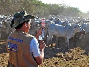 Adapec fiscaliza as propriedades para garantir a imunização (Foto: Adapec/Divulgação)
