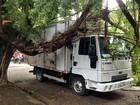 Árvore cai sobre caminhão e bloqueia Rua Fernandes Vieira, no Recife