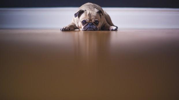 estresse, triste, cansado, sono, infeliz, estressado (Foto: Reprodução/Pexels)