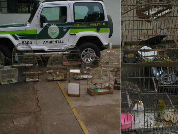 Pássaros estavam engaiolados na casa do homem que morreu (Foto: Divulgação/Polícia Ambiental)