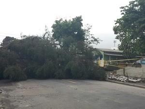 Árvore cai e derruba muro de creche em São José (Foto: Benedito Alves/ Vanguarda Repórter)