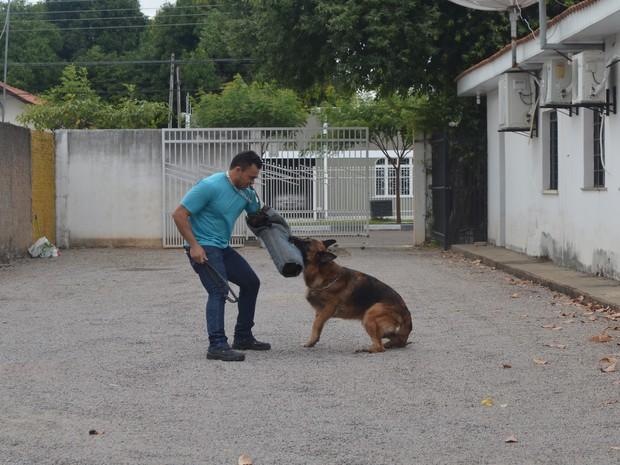 Gomes faz três tipos de adestramento com os animais: obediência, guarda e proteção e exposição. (Foto: Emily Costa/G1)