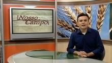 Antônio Nóbrega - Nosso Campo (Foto: Reprodução)