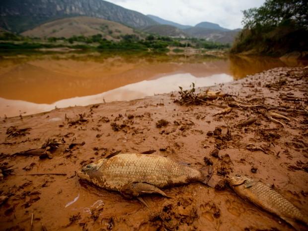 Desastre em Minas Gerais (Foto: Gabriela Biló/Estadão Conteúdo)