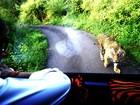 Ator indiano vira hit na web ao ser seguido por tigre por 4 km