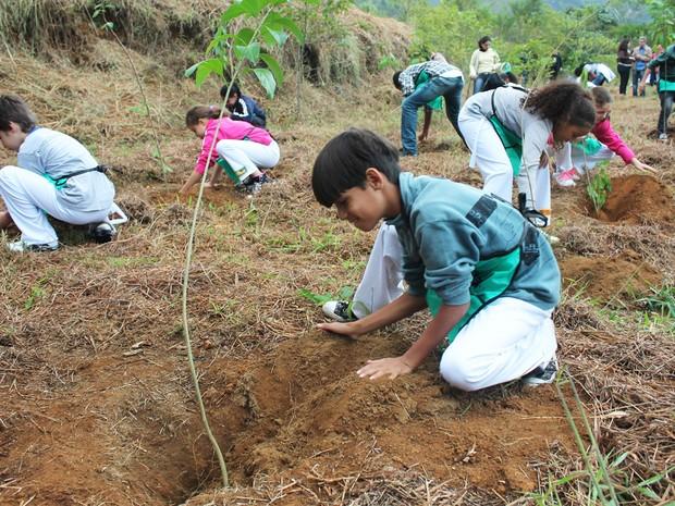 Depois de cultivadas pelos alunos, as mudas se transformam em árvores para plantio definitivo (Foto: Divulgação)