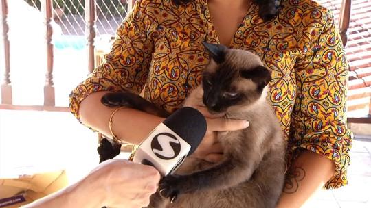 'Rio Sul Revista' vai falar sobre gatos