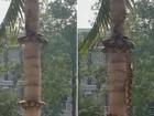 Cobra enorme usa técnica incrível para subir em árvore na Tailândia