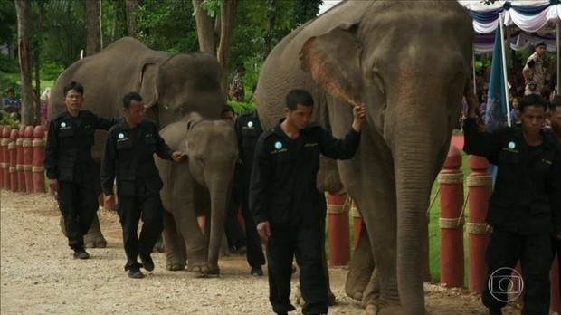 Santuário reabilita elefantes que sofrem com turismo local na Tailândia (Foto: BBC)