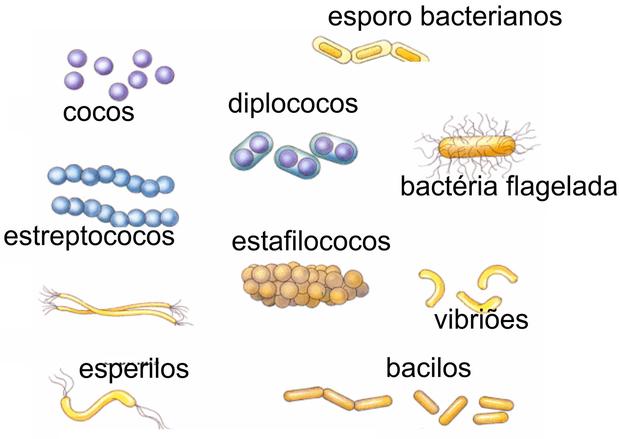 Bactérias (Foto: Colégio Qi)