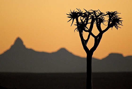 Pôr do sol com um kokerboom no Parque Transfronteiriço Ai-Ais no sul da Namíbia  (Foto: © Haroldo Castro/ÉPOCA)