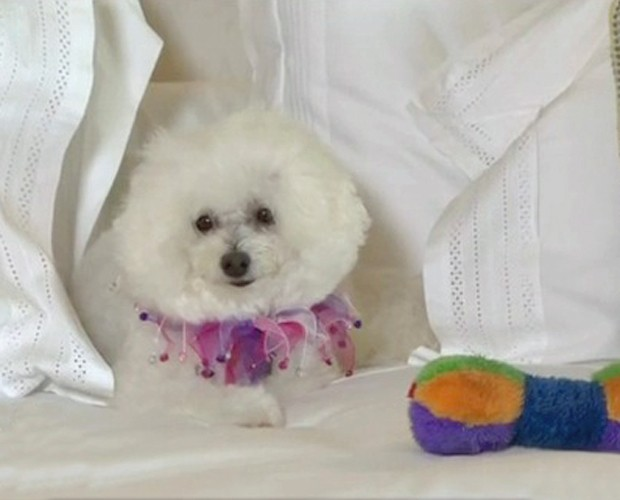 Cachorrinha de luxo está hospedada em hotel de luxo (Foto: Mais Você / TV Globo)