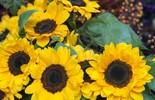 Flores: confira dicas de decoração e de presentes