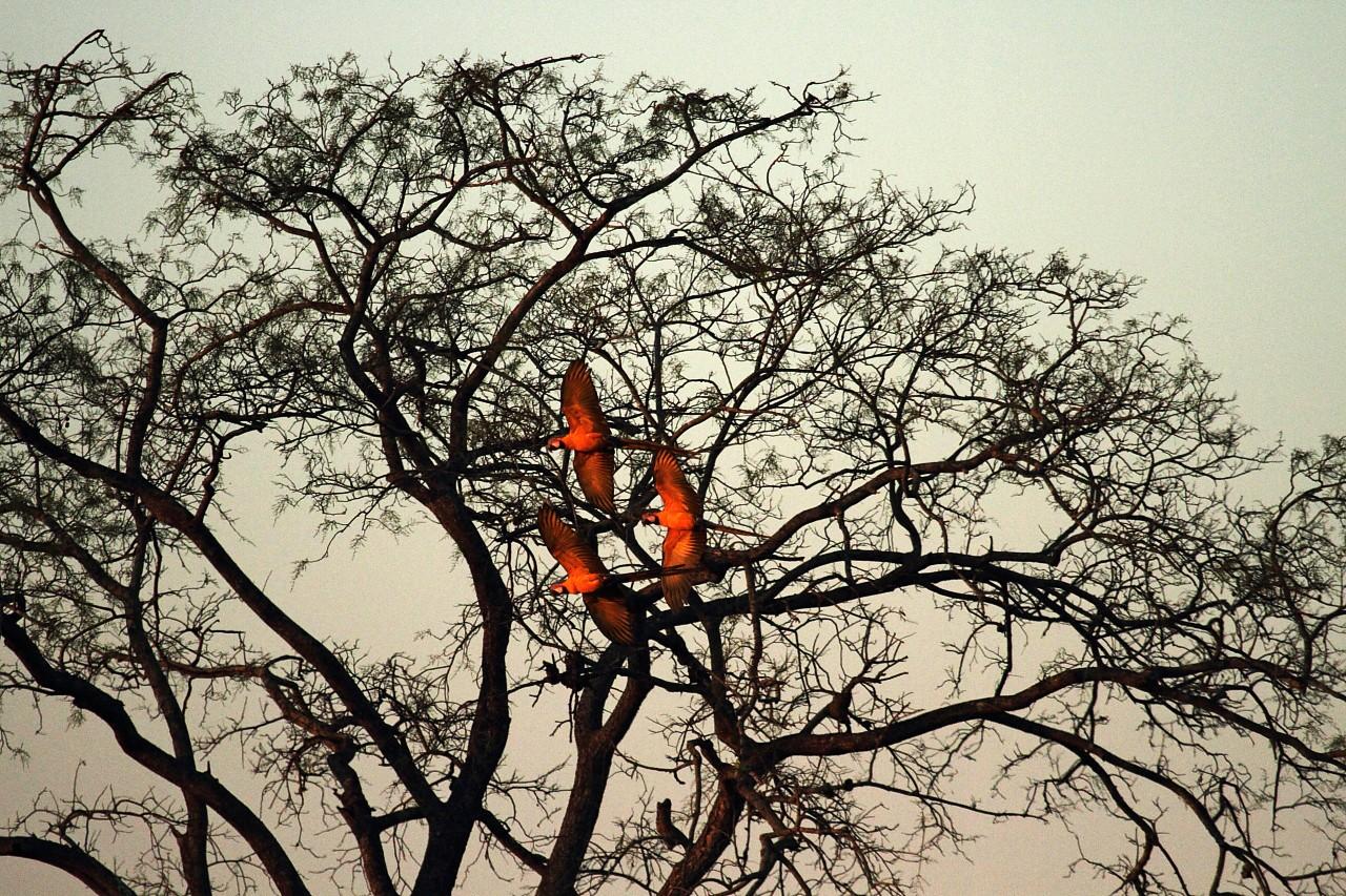Meu Ms: Fotógrafo mostra seu olhar sobre o pantanal sul-mato-grossense (Foto: Fernando Barros)