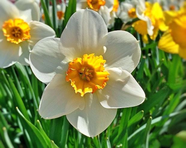 5 flores para ter no inverno