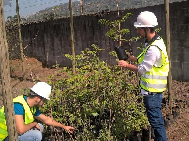 Gabriel Estevam Domingos, de 28 anos, à direita, prepara mudas para o plantio. O engenheiro ambiental e empreendedor concebeu o aplicativo que orienta o usuário a neutralizar o carbono gerado por meio do plantio (Foto: Divulgação/GED Inovação)