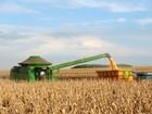 Colheita de milho em Mato Grosso dispara na última semana, diz Imea