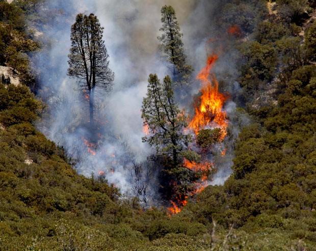 Incêndio queima árvores próximo à comunidade rural de Lake Hughes, no condado de Los Angeles, nesta segunda-feira (2) (Foto: AP)