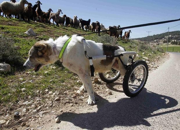 Abayev demonstra força de vontade após ser alvejado e parcialmente paralisado na Jordânia (Foto: Ali Jarekji/Reuters)