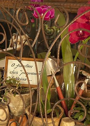 Orquídeas não podem ficar secas, nem molhadas demais (Foto: Casa e Jardim)