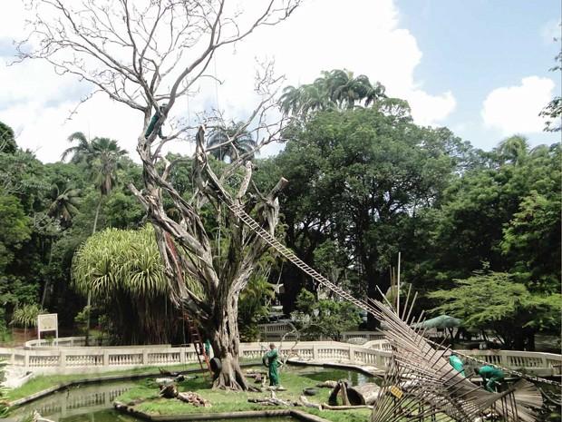 Poda evita que bichos-preguiça saiam dos limites do parque (Foto: Divulgação/Secom-JP)