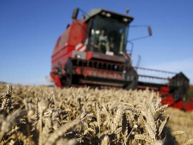 Safra de trigo do Rio Grande do Sul em 2015 teve quebra de quase 35%. (Foto: Reuters)
