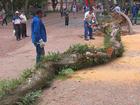 Árvore de cerca de 20 metros cai no Centro de Porto Alegre
