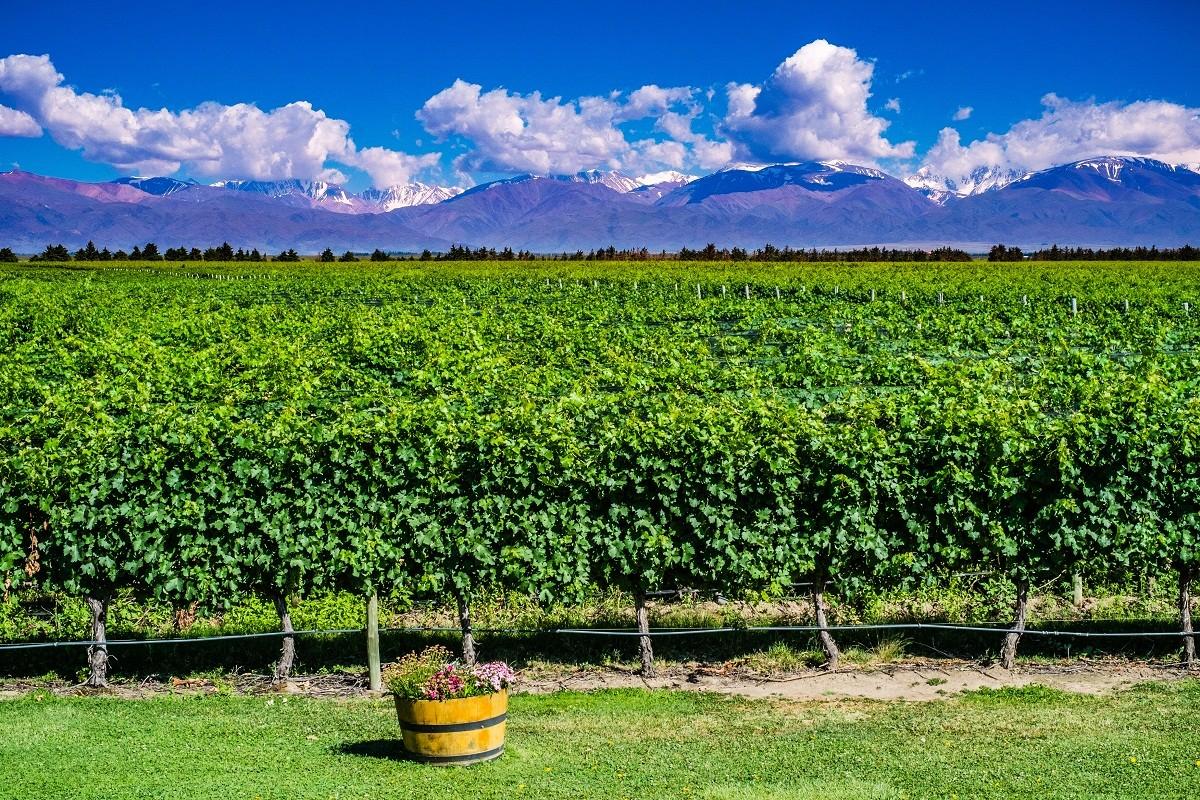 Mendoza, na Argentina (Foto: Divulgação)