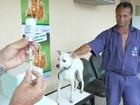 Campanha de vacinação de cães e gatos contra raiva começa no ES