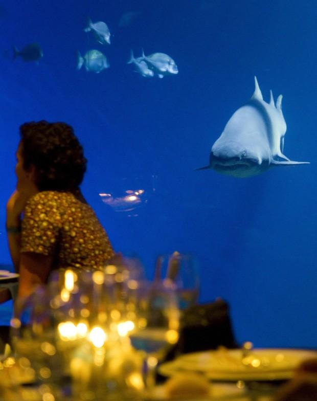 Tubarão 'encara' cliente de restaurante do Palma Aquarium (Foto: Jaime Reina/AFP)