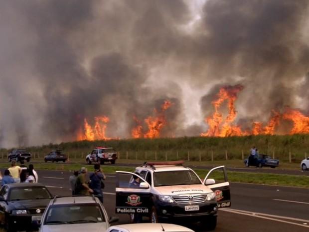 Presos em fuga colocaram fogo no canavial ao lado do CPP de Jardinópolis, SP (Foto: Reprodução/EPTV)