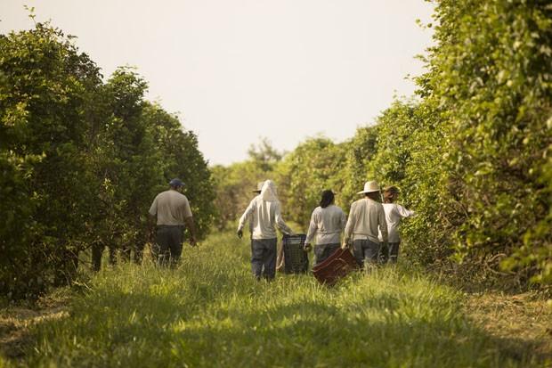 Fazenda da Toca (Foto: Kiko Ferrite / divulgação)