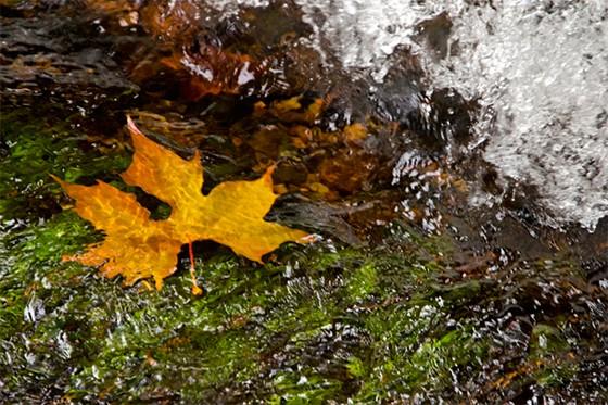 Uma folha desliza pelas águas do riacho Galhardada (Foto: © Haroldo Castro/Época)