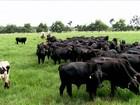 Projeto combina pecuária moderna e preservação da Floresta Amazônica