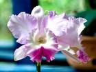 Orquídeas e bromélias raras são destaque em exposição do ES