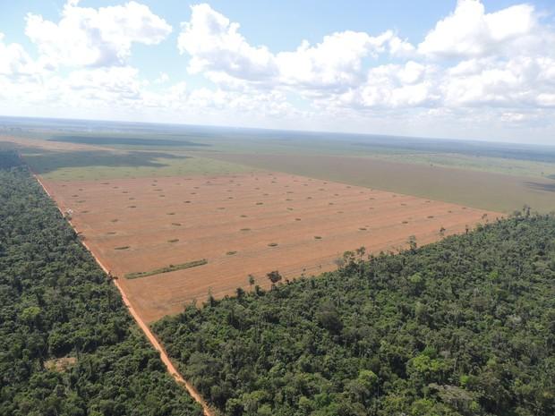 Arroz foi produzido em áreas desmatadas e embargadas (Foto: Badaró Ferrari/Assessoria Ibama)