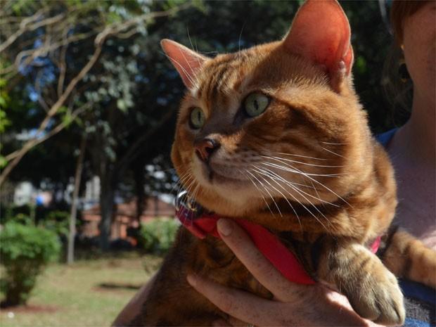 Prince, gato da raça Bengal, participou de desfile para pets em Ribeirão Preto (Foto: Rodolfo Tiengo/ G1)