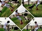 Fiuk se diverte brincando com cachorros em jardim