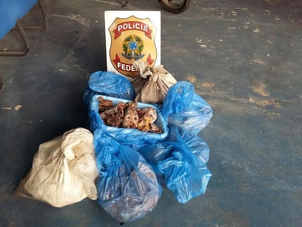 Carne apreendida em operação da PF e Funai foi descartada  (Foto: Divulgação Polícia Federal)