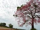 Vale do Jamari terá novamente céu nublado e trovoadas nesta sexta, 5