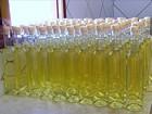 Água de esgoto tratada serve para cultivar palma e irrigar pasto no RN