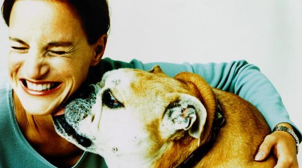 pets; animal; animais; cachorros; cães; cão (Foto: ThinkStock)