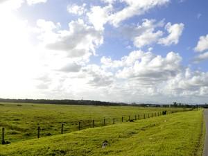 Terreno onde BMW construirá primeira fábrica da América Latina fica em Araquari, SC (Foto: Diorgenes Pandini/Agência RBS)