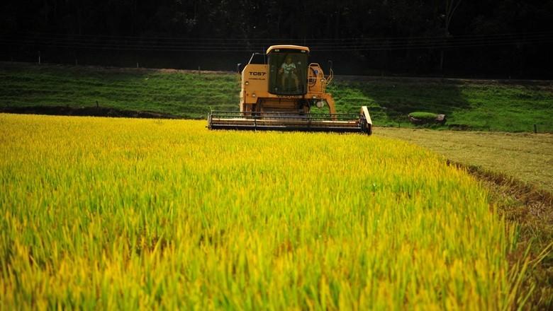 arroz (Foto: Editora Globo)