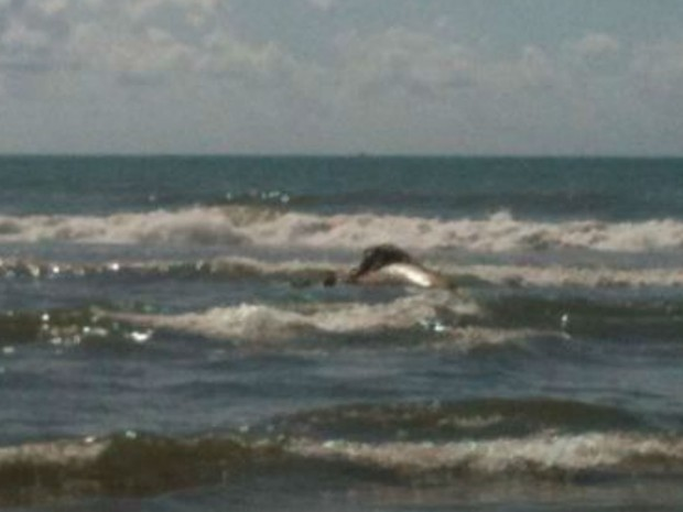 Baleia encontrada morta no litoral sul de Ilhéus, na Bahia (Foto: Ceci Seminara)