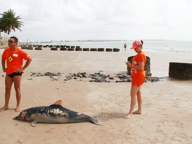 Golfinho foi encontrado morto na praia do Bessa por funcionário de uma residência nesta terça-feira (16) (Foto: Walter Paparazzo/G1)